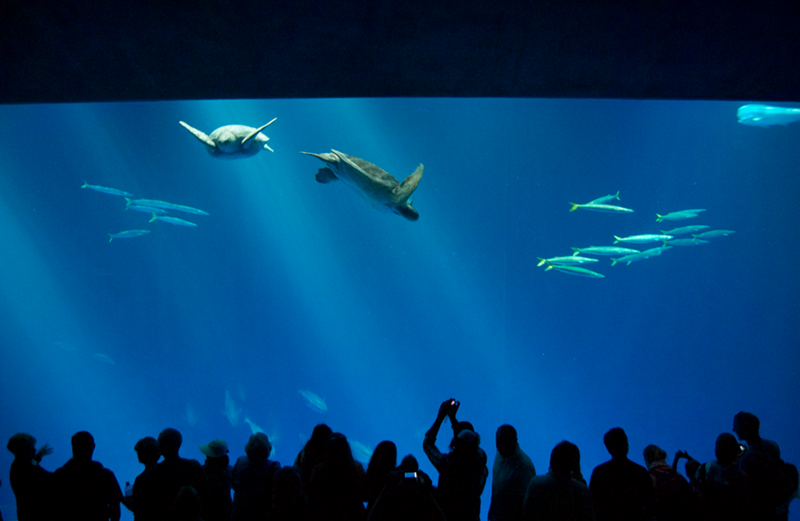 Aquari de Monterey.