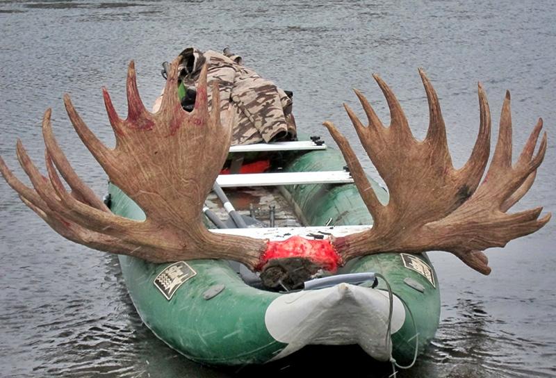 moose-banyes